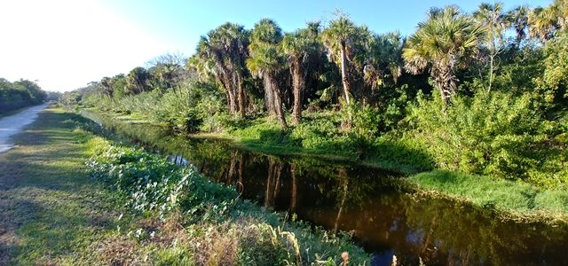 Alligator Creek Trail in Venice – perfect for an afternoon walk