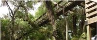 Myakka Canopy